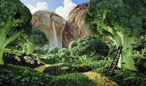 paisajes-verduras-bosque